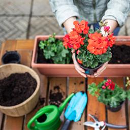 Bacs à fleurs et cache-pots
