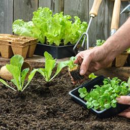 Semer, récolter, protéger