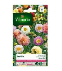 Graines Dahlia Unwin Varié - VILMORIN