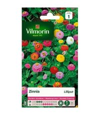 Graines Zinnia Lilliput - VILMORIN