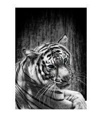 Toile glassart 30x45 tigre