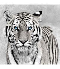 Toile 45x45 tigre yeux bleu