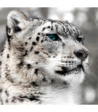 Toile glassart 30x30 leopard blanc