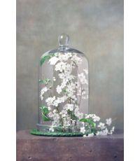 Toile fleur sous cloche 30x45cm