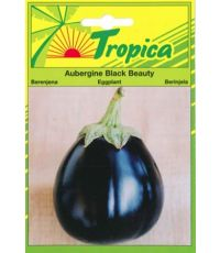Aubergine Black Beauty - TROPICA