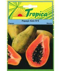 Papaye solo n°8 - TROPICA
