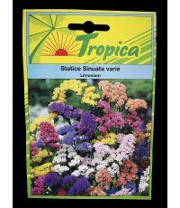Statice Sinuata varie - TROPICA