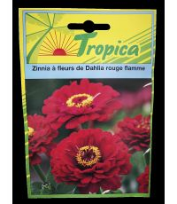 Zinnia à fleurs de Dahlia rouge flamme - VILMORIN