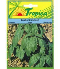 Basilic grand vert   - TROPICA