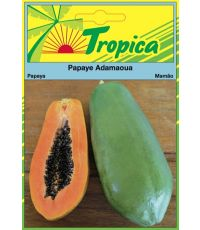 Papaye Adamaoua - TROPICA