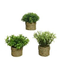 Plante PE en pot x3 - EVERLANDS