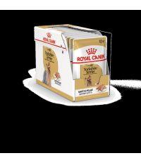 Pâtées Chien Yorkshire Adult 12x85gr - ROYAL CANIN
